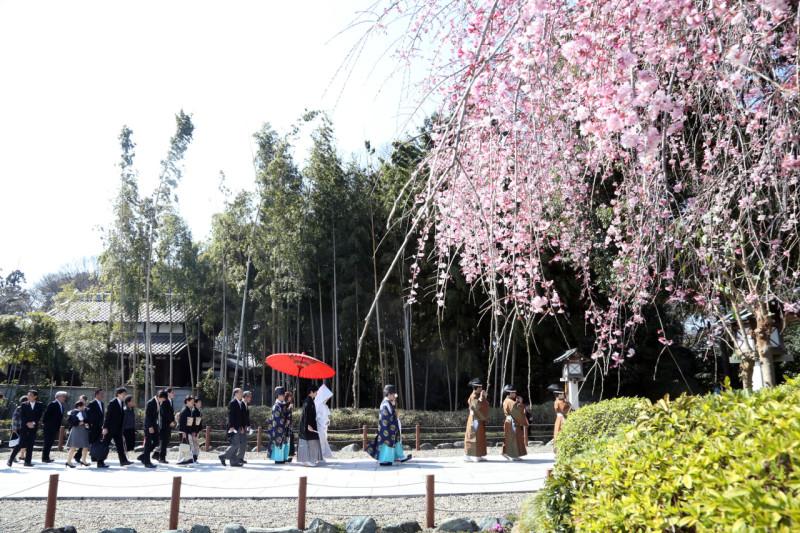 櫻木神社 しだれ桜
