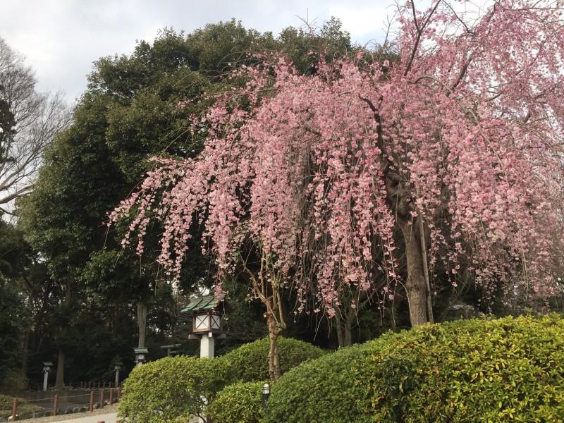櫻木神社4