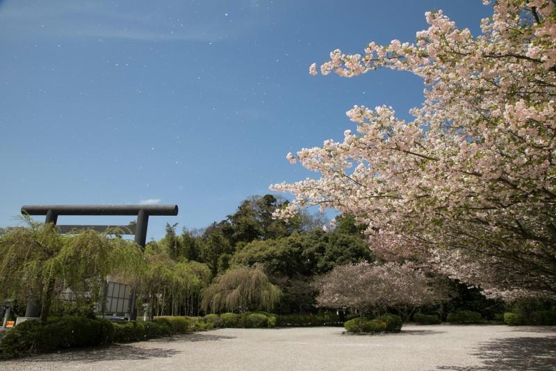 櫻木神社 桜